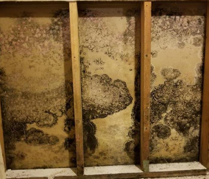 Mold Remediation There Is Nothing Like a Dam: How Ice Dams Lead to Mold Damage